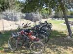 Shady Cycles